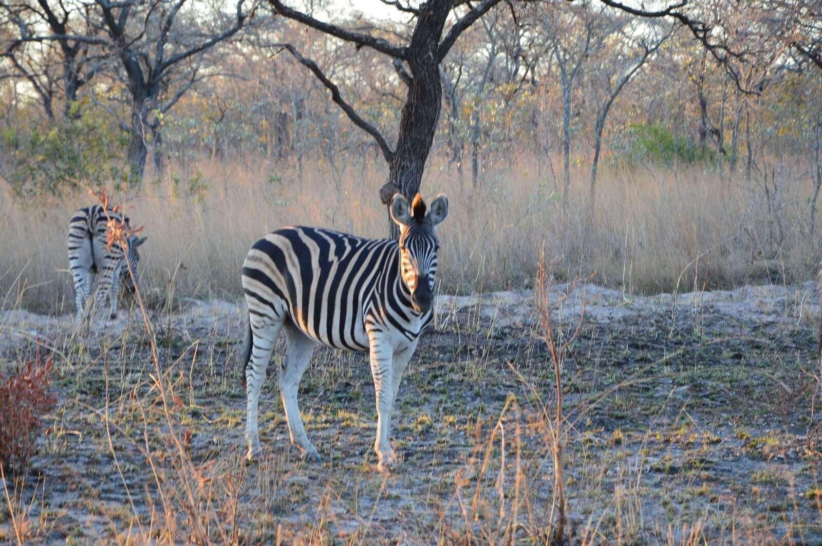 Kruger Park - Sud Africa