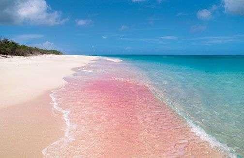 Pink-Sand-Beach-Barbuda
