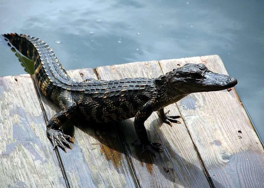 Everglades, florida @sometravelago