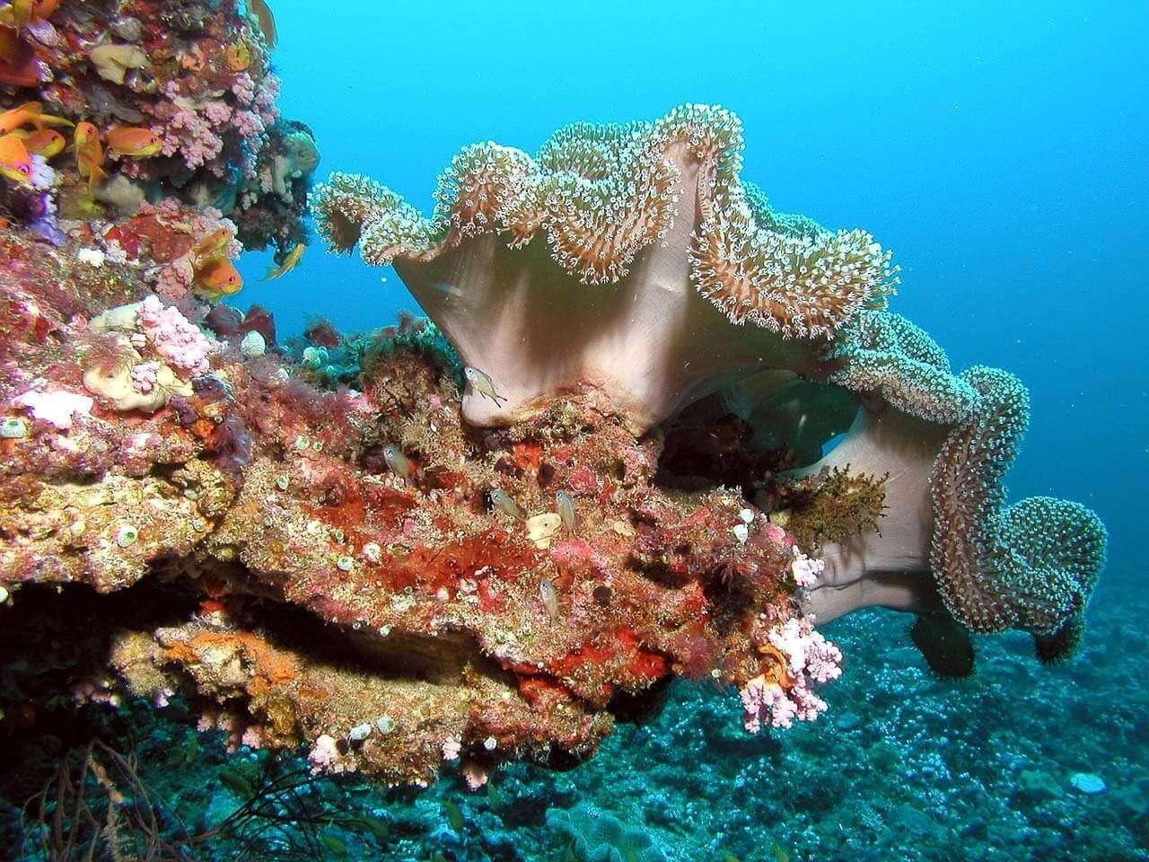 Vita sottomarina - Maldive
