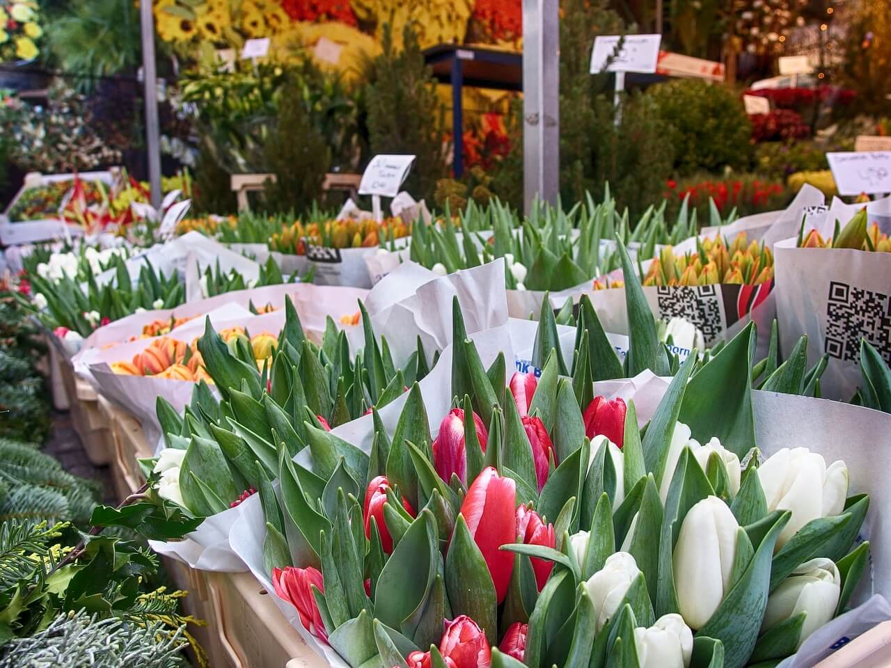 What to do in Amsterdam - Flowers